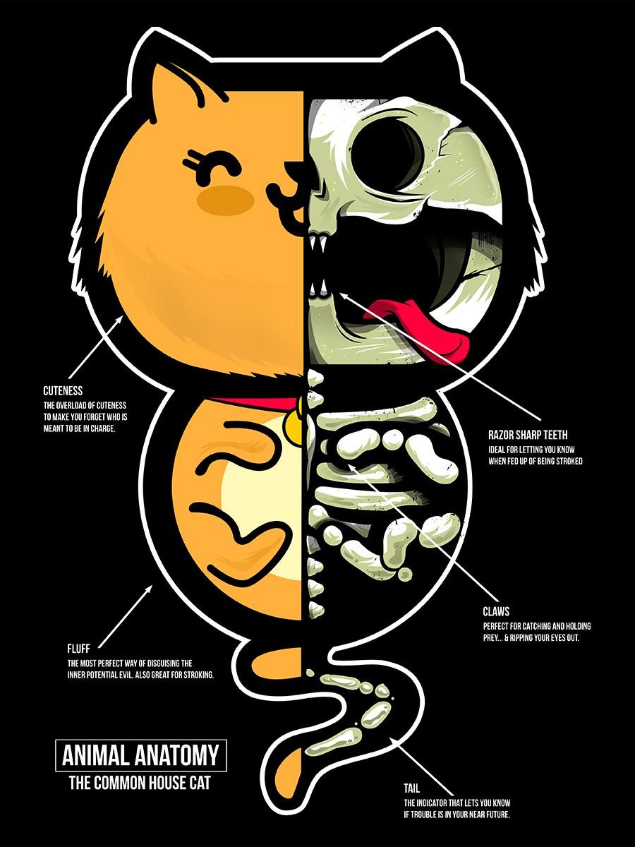 Animal Anatomy - The Common House Cat Ladies Black T-Shirt - Buy ...